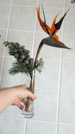 Strelizia and fir tree twig in tall slim glass vase against grey tiles