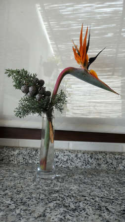 Strelizia and fir tree twig in tall slim glass vase against drawn curtain
