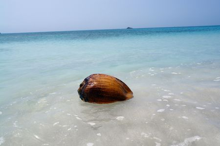 coconut floating in the ocean                               photo