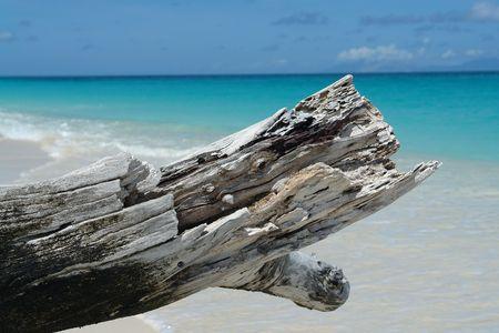 cloud drift: close up of a drift wood log                                Stock Photo