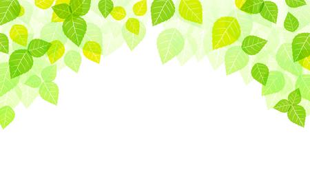 Feuilles de fond, Spring Background, Nature, Saison