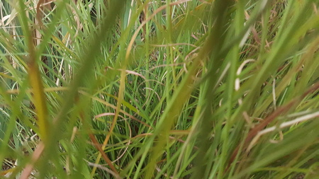 Looking through tall grass with a focused depth perception.