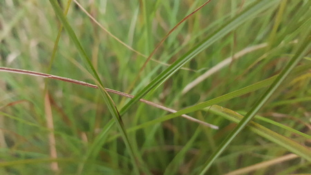 Looking at blades of grass up close with focus hightened.
