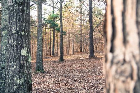 clandestine: Peeking around the edge of a tree