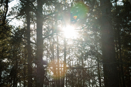 glint: Sun flare glinting through the woods Stock Photo