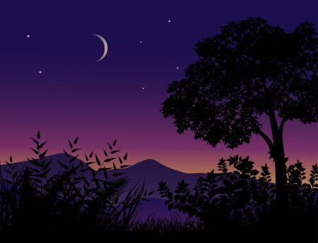 La notte della siluetta dell'albero