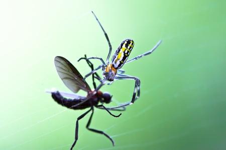 Une mouche prise dans une toile d'araignée de jardin Banque d'images - 9558001