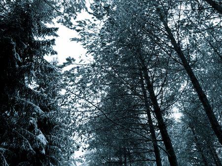 러시아어 숲에 나무
