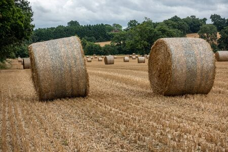 Two rolled up hay bales sitting in a field with numerous others in the background