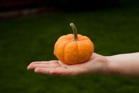 Pumpkin on hand