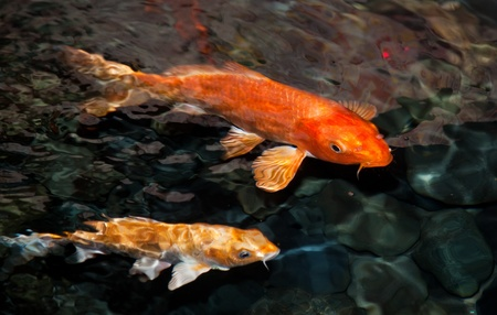 Two koi carp in a pond near the surface, slightly blurred due to water movement,