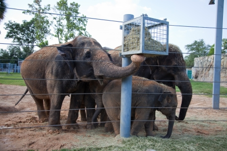 Family of elephants feeding Imagens