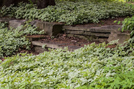 ground cover: A flagstone walkway with step surronded by ground cover. Stock Photo
