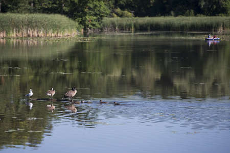 water fowl: Fowl in forground and people in a small water craft at a distance