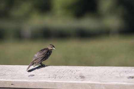 A small friendly bird standing on a wooden fence rail looking curiously at the carvings  photo