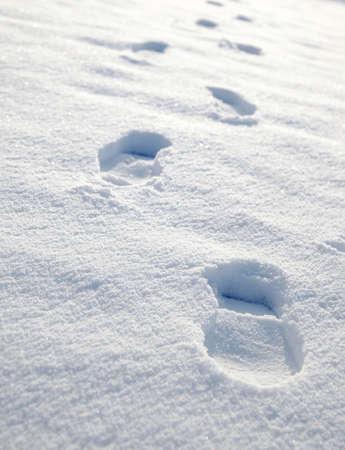 freshly fallen snow: Appena caduta neve con impronte