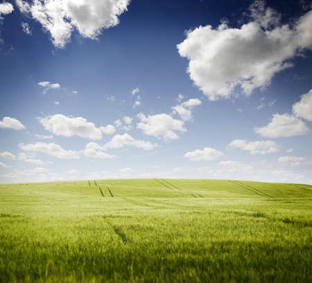 champ vert: Champ vert avec ciel bleu