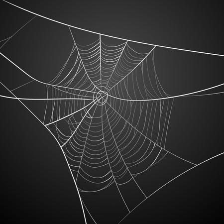 Toile d'araignée blanche sur fond sombre Vecteurs