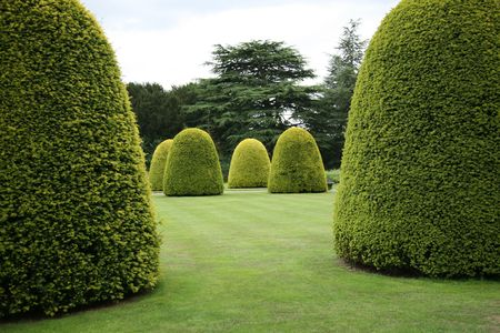 hedges: Topiary