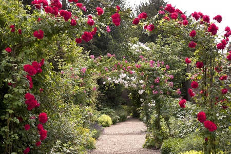 traditional climbing: English Rose Garden Arches
