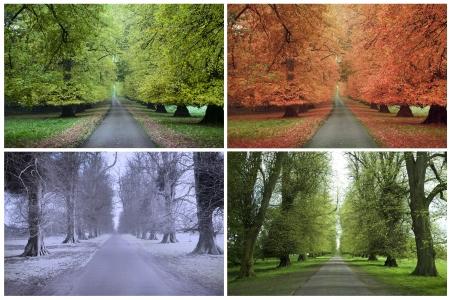 cuatro elementos: Four Seasons de una fila de tilos Foto de archivo