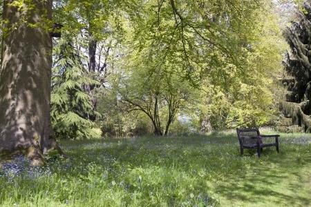 nook: Sitting Amongst the Bluebells   Forgetmenots