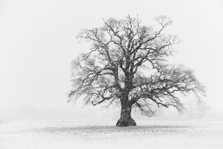 snow field: Snowy Tree Scene Black and White Stock Photo