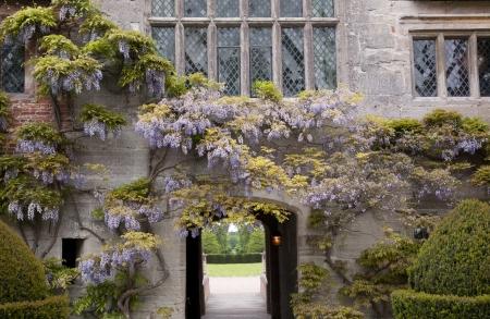 arcos de piedra: Wisteria Rambling sobre una antigua Inglés Manor Foto de archivo