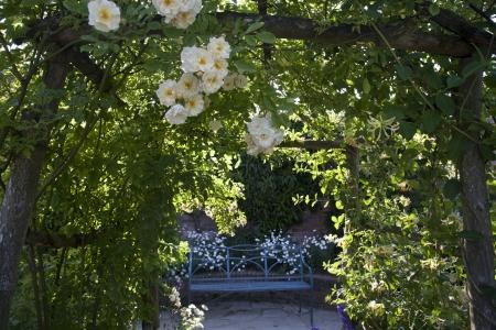 entrance arbor: Cream Rose Arch
