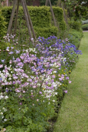 bell shaped: Pink   Blue Flowers in a Garden Border Stock Photo