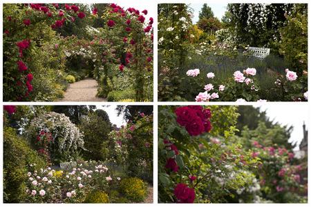 english rose: English Rose Gardens