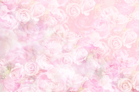Pastel Roses Pink Background Stock Photo