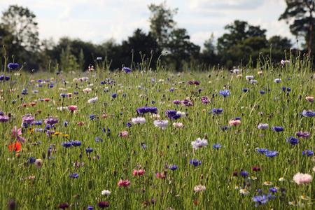 Colorido campo de flores silvestres