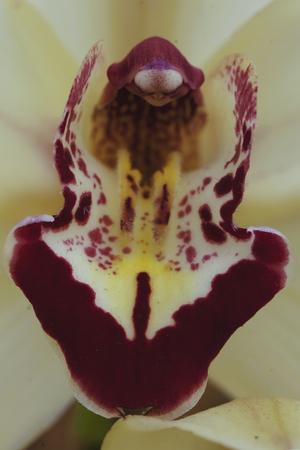붉은 털이있는 stamen을 가진 흰 난초 스톡 콘텐츠