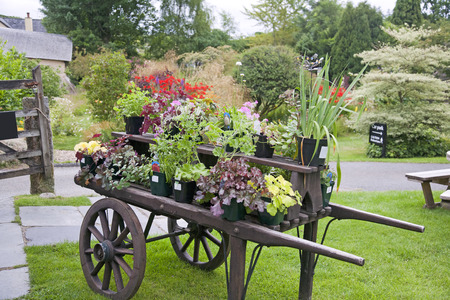 Colorful Plants on a Wheelbarrow