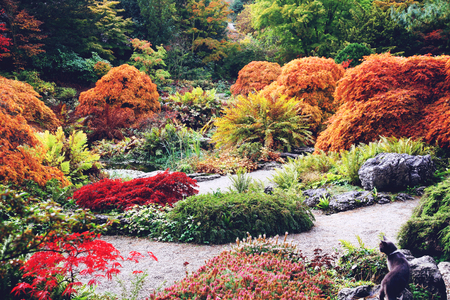 Colorful English Garden in Autumn