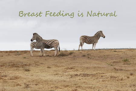 Mother Feeding Young – Breast Feeding is Natural