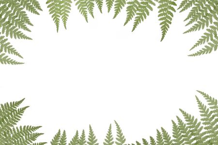 Border of green ferns on a white background with copy space