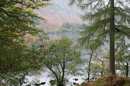 Evergreen Fir Trees on the edge of Lake Ullswater, Lake District, England