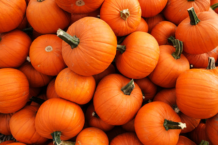 recently: Recently harvested orange pumpkins in a random pile Stock Photo