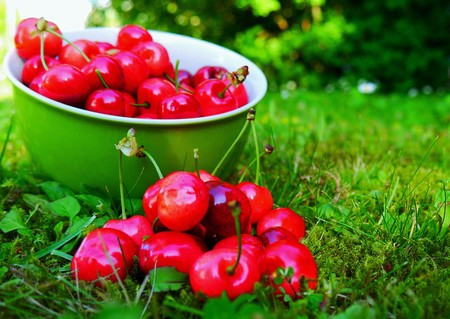 Cherries in a bowl and on grass in the garden
