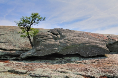 A granite rock on top of a granite mountain with a tree growing out of the base  Zdjęcie Seryjne
