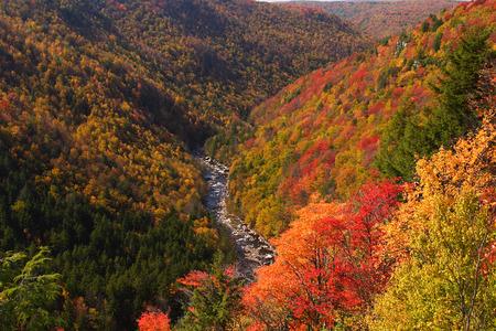 west virginia trees: Fall Mountain Scenic Stock Photo