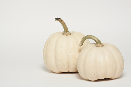 Two Albino Mini Pumpkins 版權商用圖片
