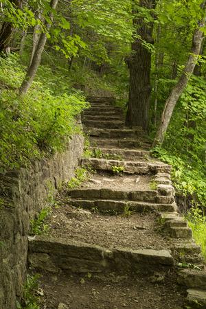 森の中に石のステップ トレイル