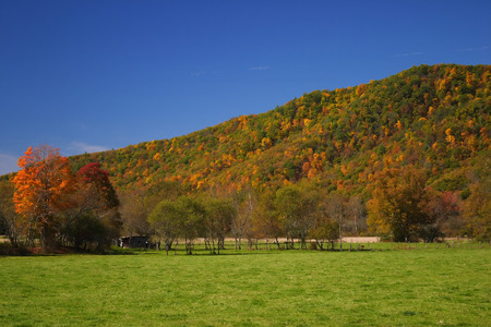 west virginia trees: Fall Country Scene