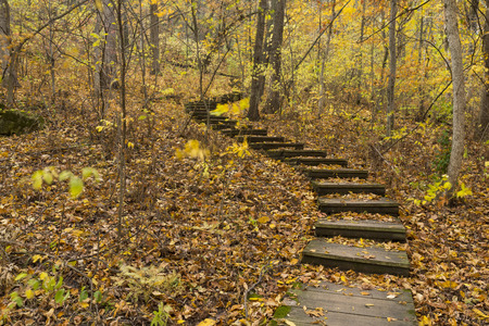 minnesota woods: Step Trail In Woods Stock Photo