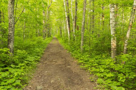 森の中のハイキング コース 写真素材