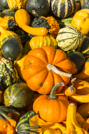 assortment: Gourds Assortment Stock Photo