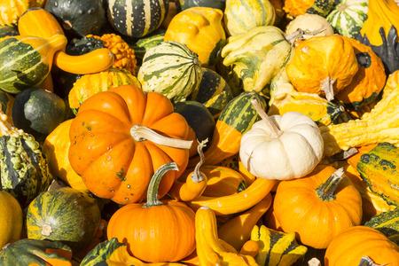 gourds: Gourds Assortment Stock Photo